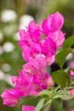 纸花在泰国的庭院里。 库存照片