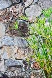 纸莎草岩石墙壁 免版税库存照片