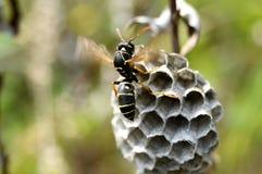 纸质黄蜂冷却蜂窝 库存照片