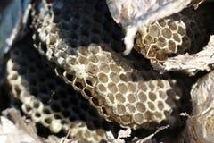 纸质黄蜂巢特写镜头细节 免版税库存照片