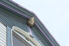 纸质黄蜂巢附有一个老房子的屋顶峰顶 库存图片