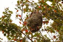 纸质黄蜂巢 免版税图库摄影
