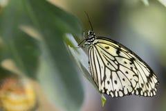 纸风筝蝴蝶,特写镜头 库存图片