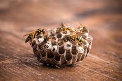 纸质黄蜂巢 库存图片