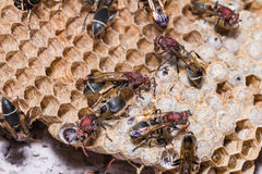 纸质黄蜂 库存图片