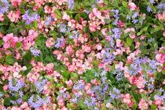 纹理、织品印刷品和wale在桃红色和蓝色花的无缝的美好的花卉样式的 免版税库存照片