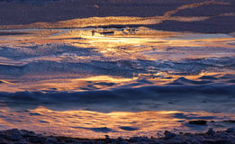纹理一条河的冰表面第一天结冰的 免版税库存照片