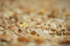 纹理下落的黄色叶子 免版税库存照片