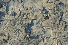 纹理分层堆积变质岩 免版税图库摄影