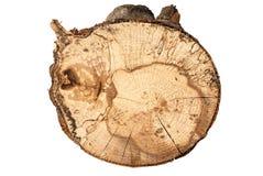 纹理在白色背景和树桩隔绝的山毛榉树 免版税库存照片