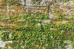 纹理墙壁古老宫殿石灰石块用绿色和红色青苔盖的 变老是17世纪 免版税图库摄影