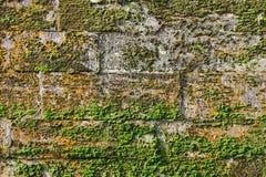 纹理墙壁古老宫殿石灰石块用绿色和红色青苔盖的 变老是17世纪 免版税库存照片