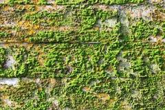 纹理墙壁古老宫殿石灰石块用绿色和红色青苔盖的 变老是17世纪 库存图片