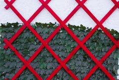 纹理墙壁和植物 免版税库存图片