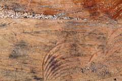 纹理或背景的树桩木结构 库存图片