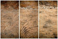纹理或背景的树桩木结构 库存照片