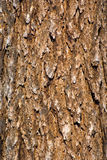 纹理树干 图库摄影