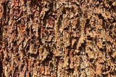 纹理树 库存图片