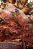 纹理棕榈树  图库摄影