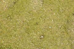 纹理海底 库存图片