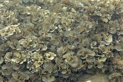 纹理海藻 库存图片