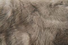 纹理灰色毛皮 图库摄影