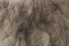 纹理灰色毛皮 免版税库存照片
