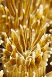 纹理珊瑚 图库摄影