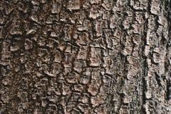纹理的树背景 免版税库存照片