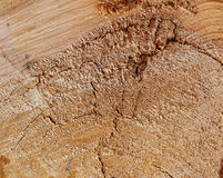 纹理看了裁减老树 库存图片