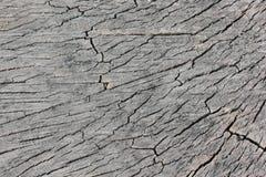 纹理砍的百年树。 库存照片
