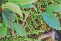 纹理离开小植物 免版税图库摄影