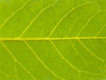 纹理结构树叶子秋天 免版税库存图片