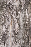 纹理结构树 免版税库存图片