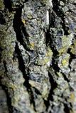 纹理结构树 图库摄影
