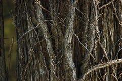 纹理结构树 库存图片