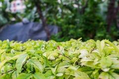 纹理绿色叶子  免版税图库摄影