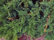 纹理绿色植物 免版税图库摄影