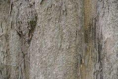 纹理老木头在森林里 免版税库存照片
