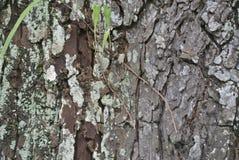 纹理老木头在森林里 图库摄影