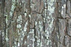 纹理老木头在森林里 库存照片