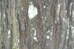 纹理老木头在森林里 免版税库存图片