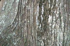 纹理老木头在森林里 免版税图库摄影