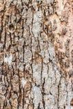 纹理老木头同样石头 免版税库存照片