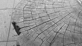 纹理老木 免版税库存图片