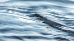水纹理背景河特写镜头 免版税图库摄影