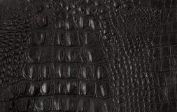 纹理被制作黑鳄鱼皮革 免版税图库摄影