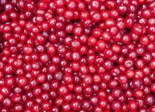 纹理许多樱桃果子 免版税库存照片