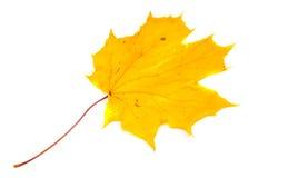 纹理,样式,背景 秋叶毛孔,湿黄色ma 图库摄影