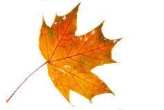 纹理,样式,背景 秋叶毛孔,湿黄色ma 免版税库存图片